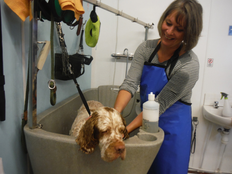 Shaw Dog Grooming Academy In Devon City And Guilds Training Level 3