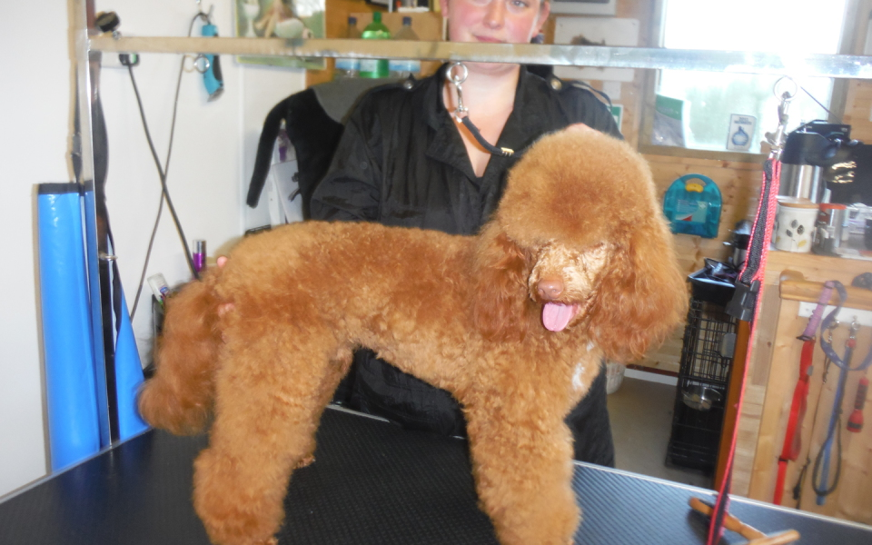 City And Guilds Level 3 Dog Grooming Courses Devon